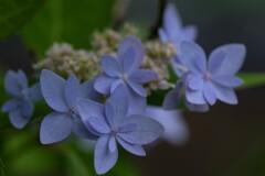 ペーパークラフトのようなお花
