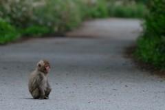 お母さんを待つ子猿
