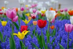 どの花みても、きれいだなぁ~♪