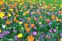 元気の出るお花畑