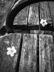花は散っても