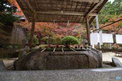 仁比山神社の秋⑦