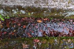 仁比山神社の秋③