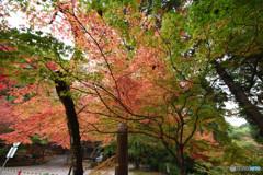 仁比山神社の秋⑪
