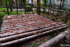 仁比山神社の秋⑤