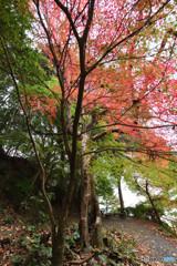 近場の紅葉⑥