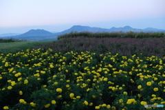 5岳とお花畑