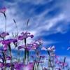 空に描く花