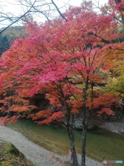 紅葉と河原