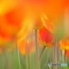 春彩のharmony