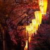上野公園 夜桜