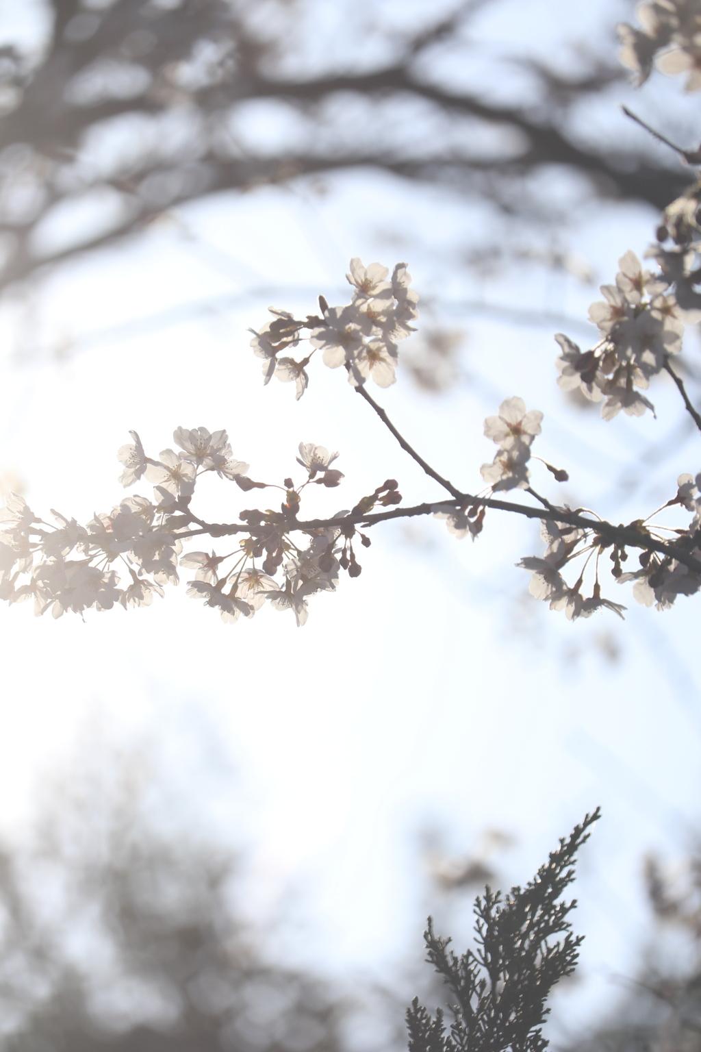 透きとおる春