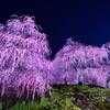 紫のキラメキ