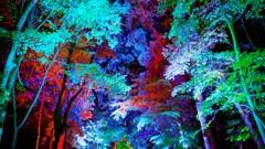 糺の森のライトアップをlightroomで現像