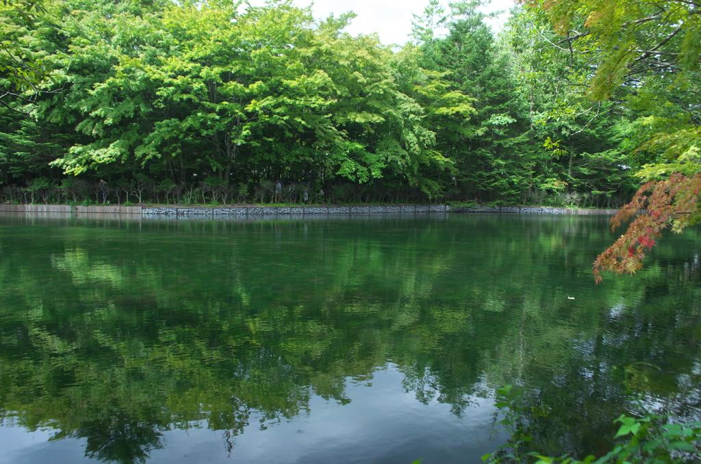 「雲場」の池 Ⅲ