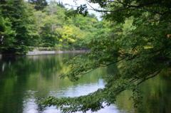 「雲場」の池 Ⅱ
