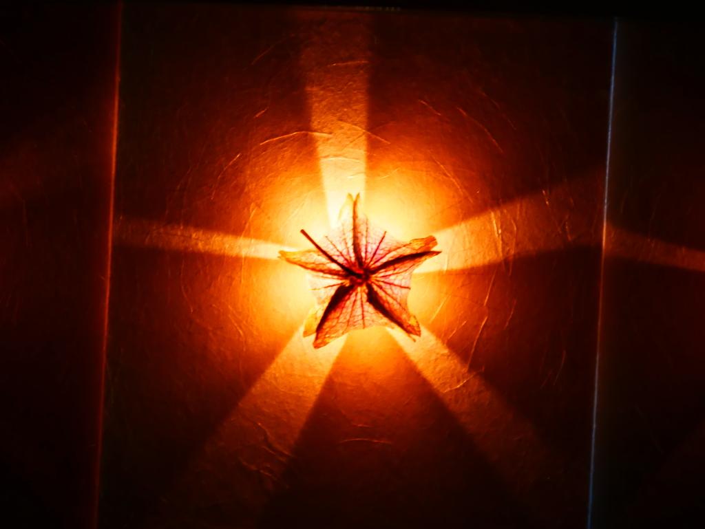 光の当て方でイメージがガラッと変わりますね