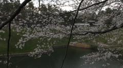 皇居の桜 半蔵門