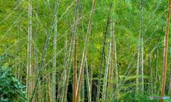 竹林の香り