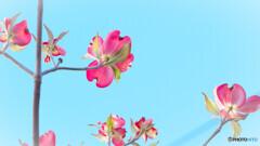 ある春の日に