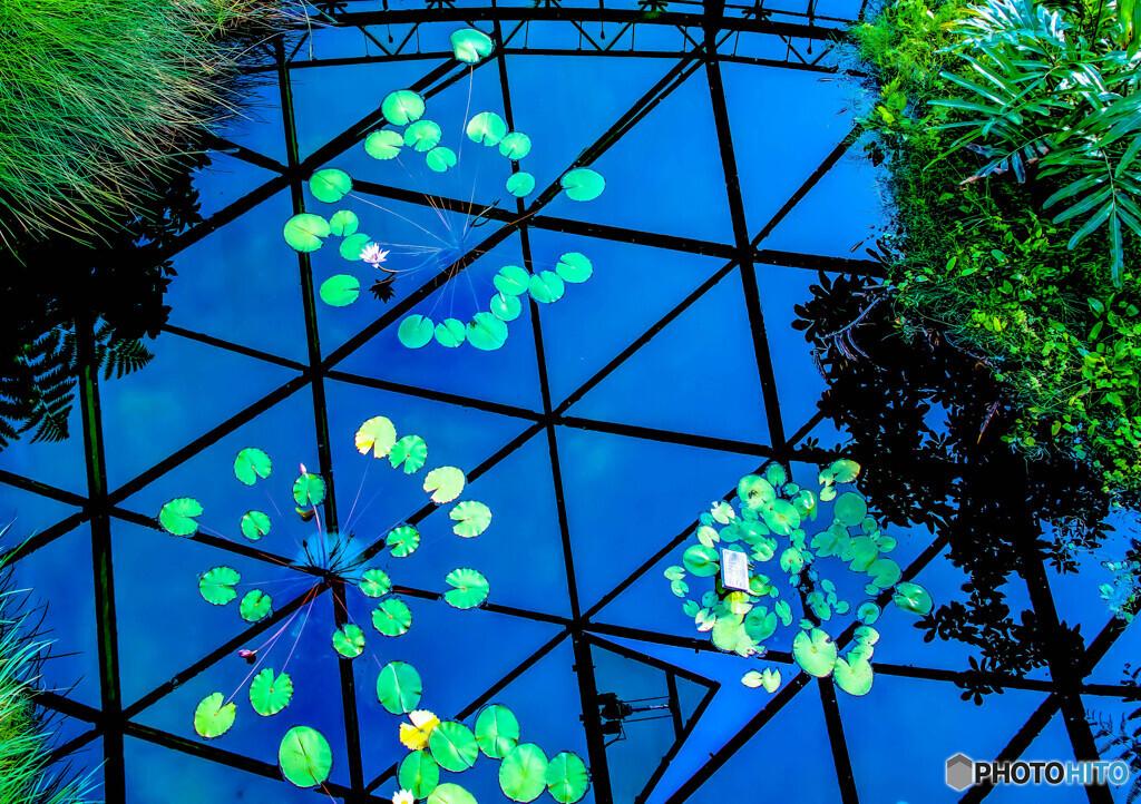 睡蓮のある温室
