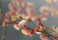 逆光の中に映える梅花
