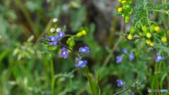 春の野原を散策