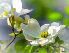 陽光の中に咲く