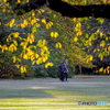 秋の散歩コース