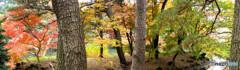 暮れの秋(くれのあき)