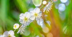 早春に咲く