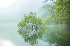 新緑の目覚め