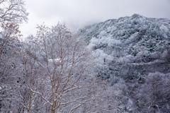 一応山へ来ました写真