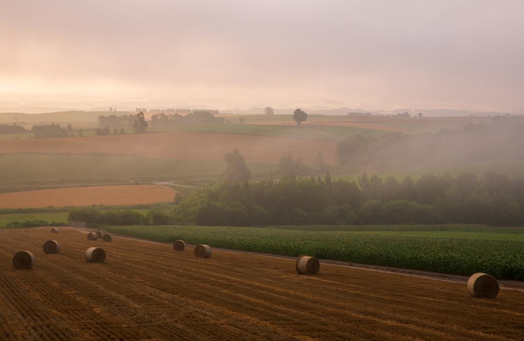 霧の麦稈ロール