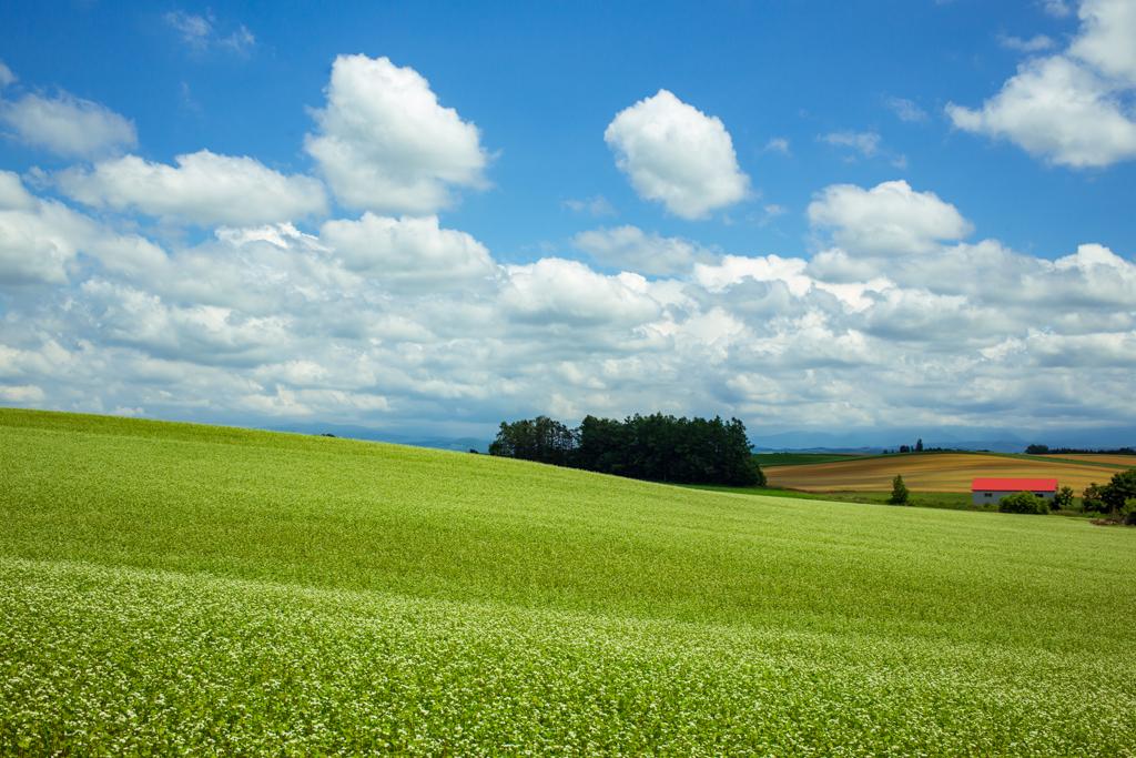 蕎麦畑を走る雲の影