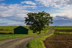 右の畑の秋蒔き小麦を撮りたい