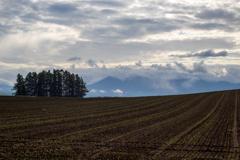 植えたての秋蒔き小麦とカラマツ林