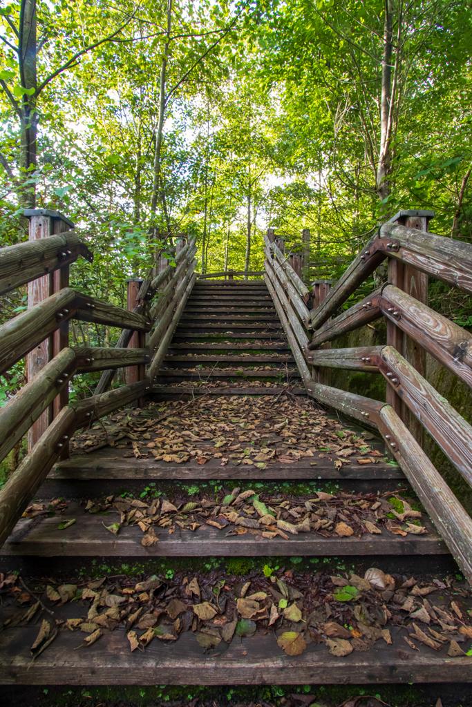 枯れ葉散る階段