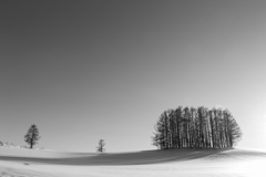 マイルドセブンの樹影
