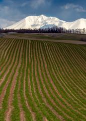 暗雲のオプタテシケと麦畑