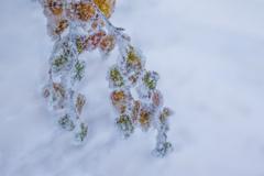 葉っぱ樹氷