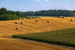 トウモロコシ畑の向こうのロール