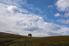 秋蒔き小麦畑の丘