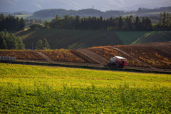 ジャガイモ収穫中