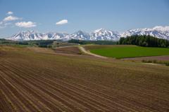 残雪とビート畑