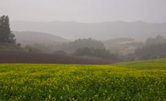 土砂降りのキガラシ畑