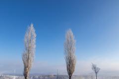 キンキンしばれた朝の空気