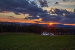 麦畑の日没