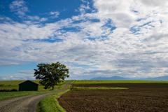 牧草の稜線を爆走するエゾシカ