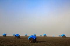 霧のニオ畑